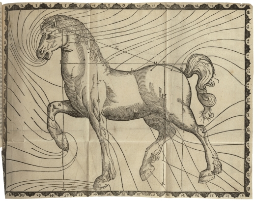 Diagram of a horse, from Markham's Maister-peece
